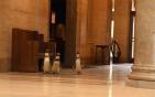 博物馆迎来仨企鹅.png