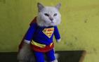 猫咪穿英雄款大衣.jpg