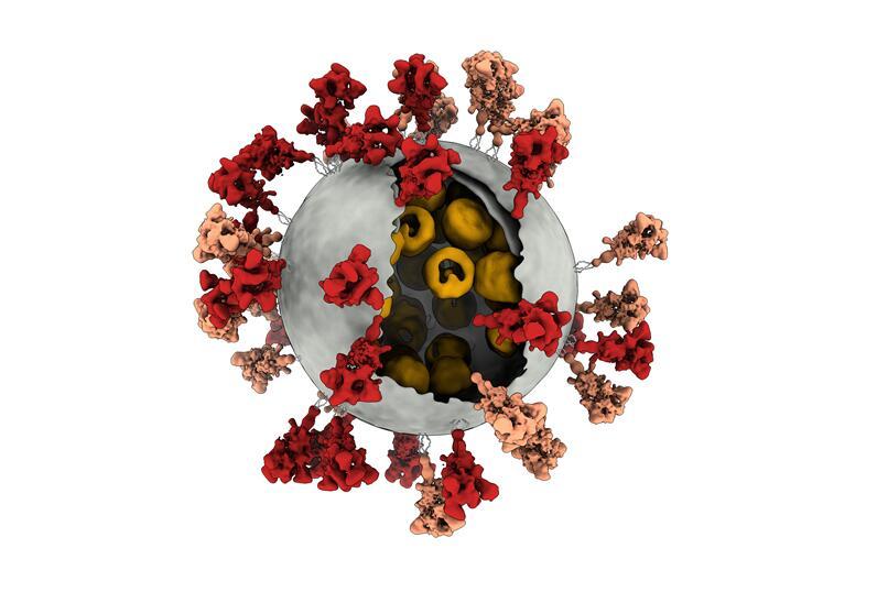 新冠病毒真实3D图像.jpg