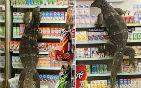 蜥蜴爬货架找食物.jpg