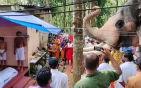 大象参加主人葬礼.jpg