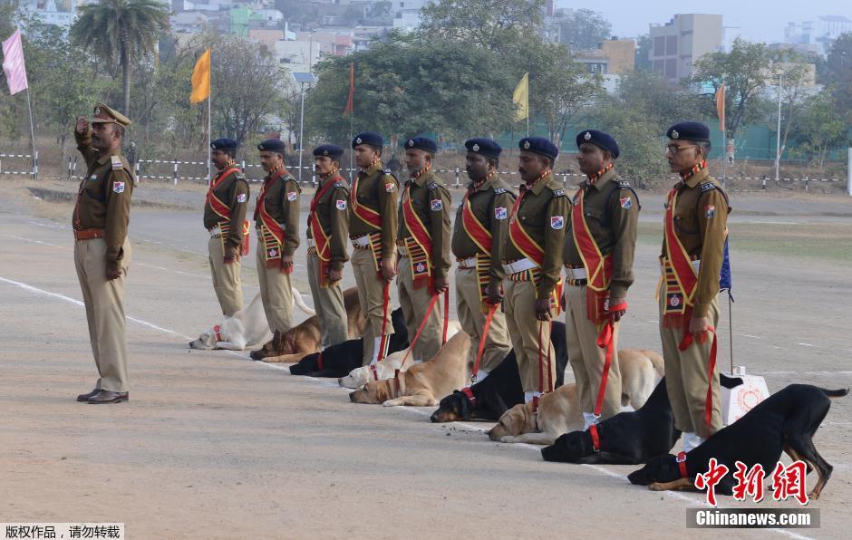 印度共和国日大阅兵 军犬抢镜叠罗汉依旧