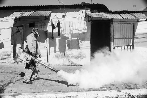 """巴西向""""寨卡""""病毒宣战 又一场埃博拉危机?"""