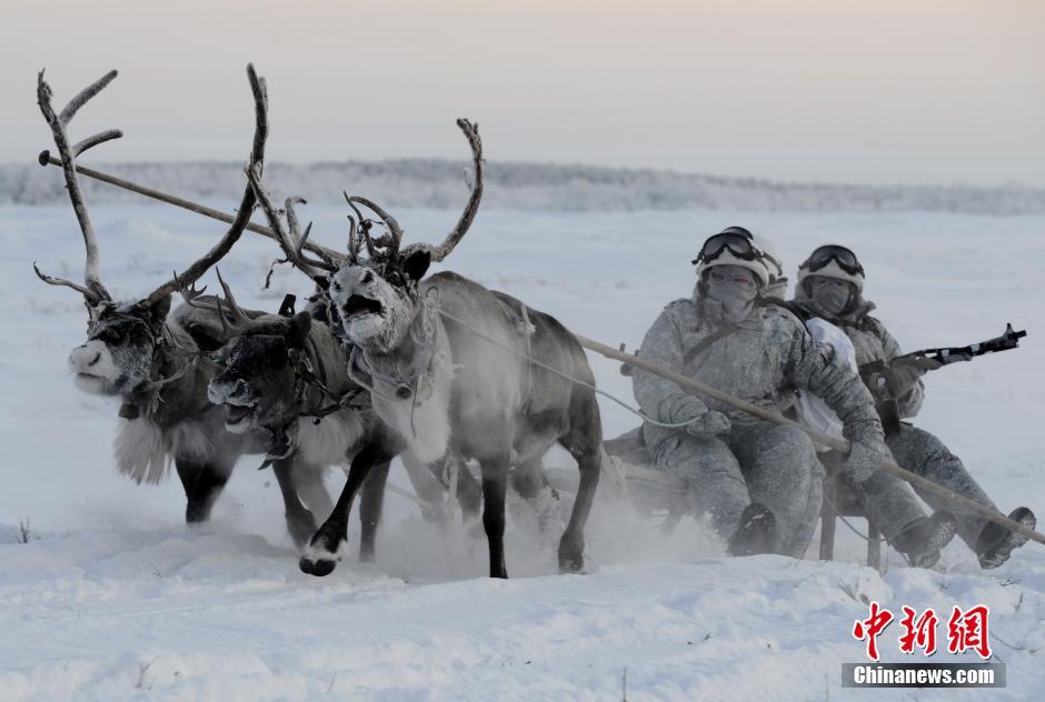 俄北极机械化步兵旅军演 驯鹿和雪橇狗协同作战