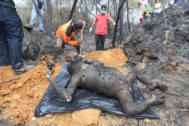 据英国《每日邮报》2月28日报道,近日,一组记录印度尼西亚森林三只母