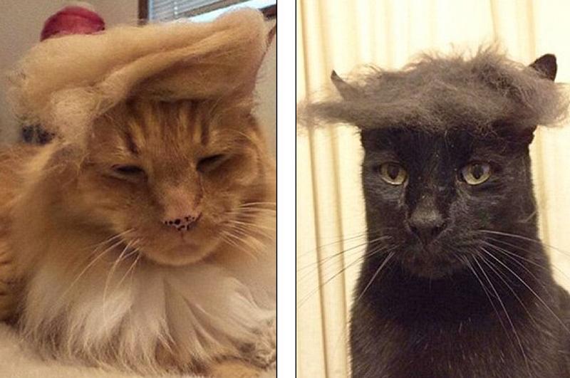 猫咪素描图片步骤图解