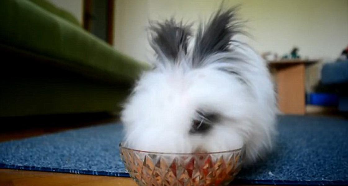 白兔吃草莓演绎恐怖片画风