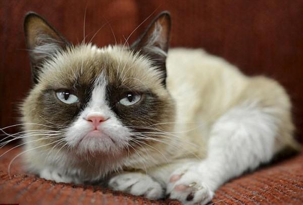 猫咪视频_壁纸 动物 猫 猫咪 小猫 桌面 600_407