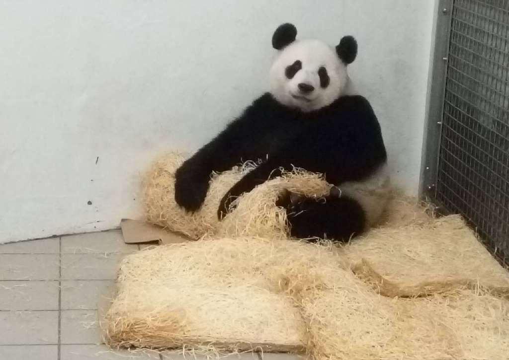 未发现的中国动物