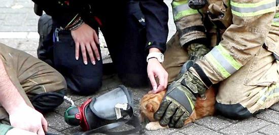荷兰喵星人被困火场奄奄一息 消防员英勇相救
