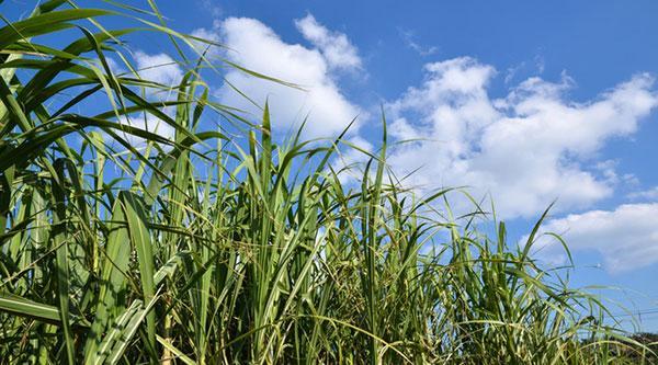 日本冲绳拟放宽外国农业劳动力限制