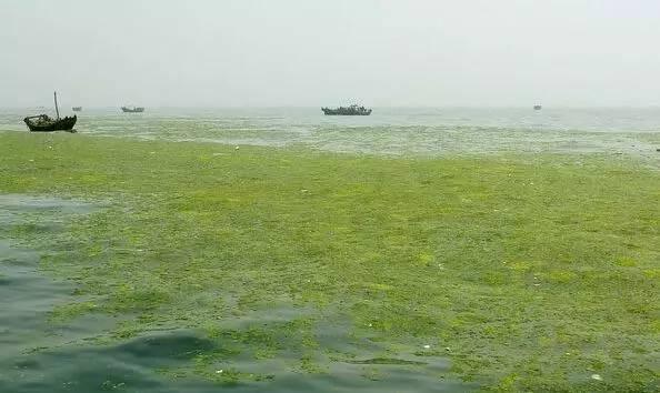 """又赖中国?韩国抱怨济州岛被来自中国的藻类""""占领"""""""