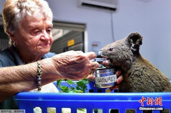暖心!澳大利亚山火蔓延 好心夫妻救助24只受伤考拉