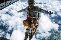 哥伦比亚跳伞犬高空飞降而下
