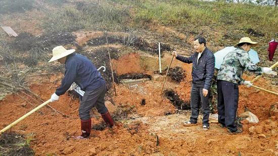退休干部非法占用林地建活人墓 村支书视而不见