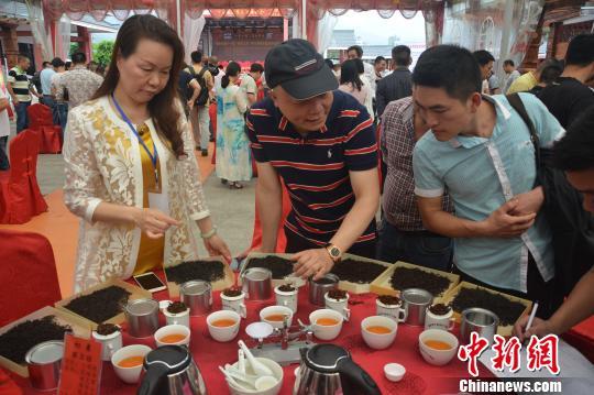 """中国百年红茶""""坦洋工夫""""发祥地福建福安""""斗茶品茗"""""""