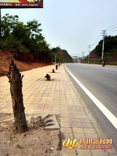 达州千余行道树枯死 村民:死了又栽 栽了又死