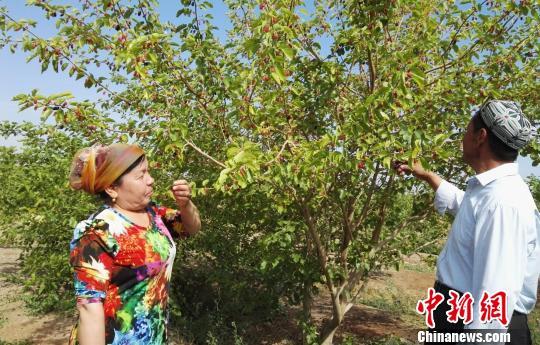 新疆吐鲁番市举办第三届桑葚节力促旅游文化产业升级