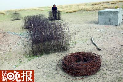 普氏原羚挂铁丝围栏上致死伤 比大熊猫还少
