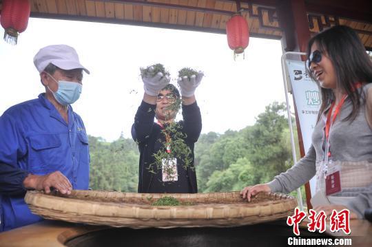 海外华媒体验炒茶 建言绿茗成长新模式