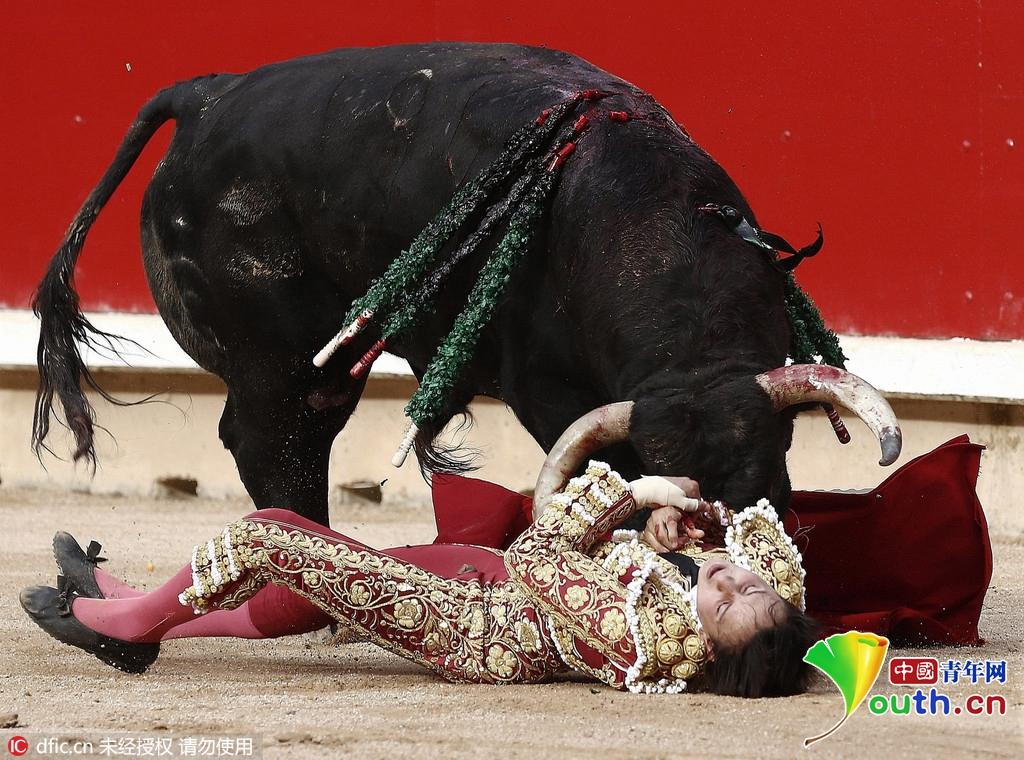西班牙斗牛太疯狂 斗牛士被拱倒在地动弹不得