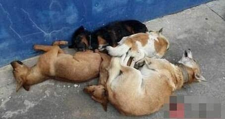 补营养毒杀8只狗