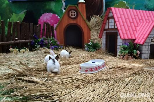 9月19日,东直门来福士商场内设置了一个小动物展区.
