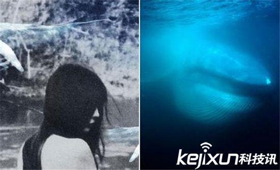 蓝鲸游戏女性参与者被裸照威胁 网友 这和裸贷一个套路