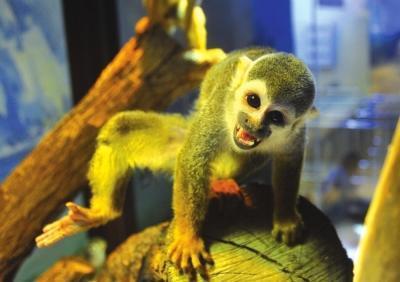 快来看4只呆萌可爱松鼠猴:个个都是表情包(图)