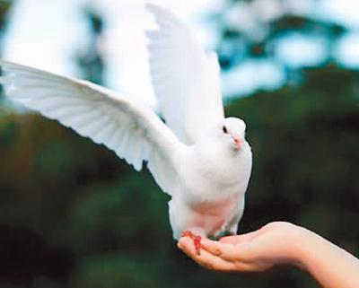 保护需以生态为本 - 梅思特 - 你拥有很多,而我,只有你。。。