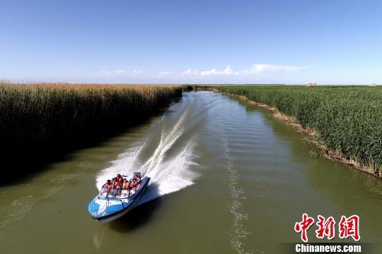 在新疆博斯腾湖阿洪口(莲海世界)景区,游客乘坐快艇穿越芦苇荡,体验水