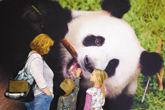 喂养大熊猫的竹子从荷兰运来.