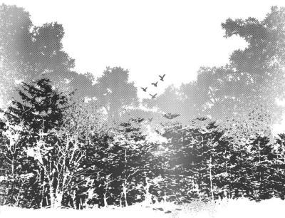 父亲坚持蹲守在小树林里,一颗流弹打在父亲蹲依的小杨树上,子弹离父亲