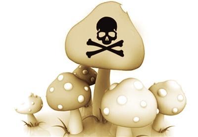 野生蘑菇又惹祸 一家三口中毒抢救_新闻频道_中国青年图片