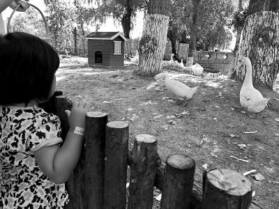 孩子们在乡村动物园观看农家饲养的小动物.王海燕摄