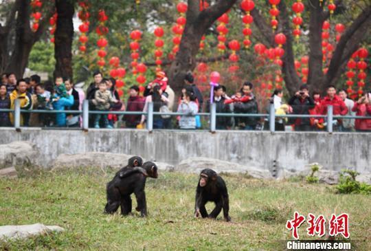广州动物园结束马戏表演 动物训练不再为取悦游客