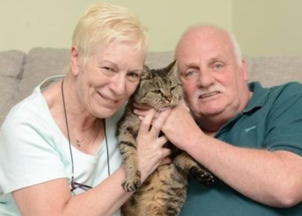 英国最老虎斑猫