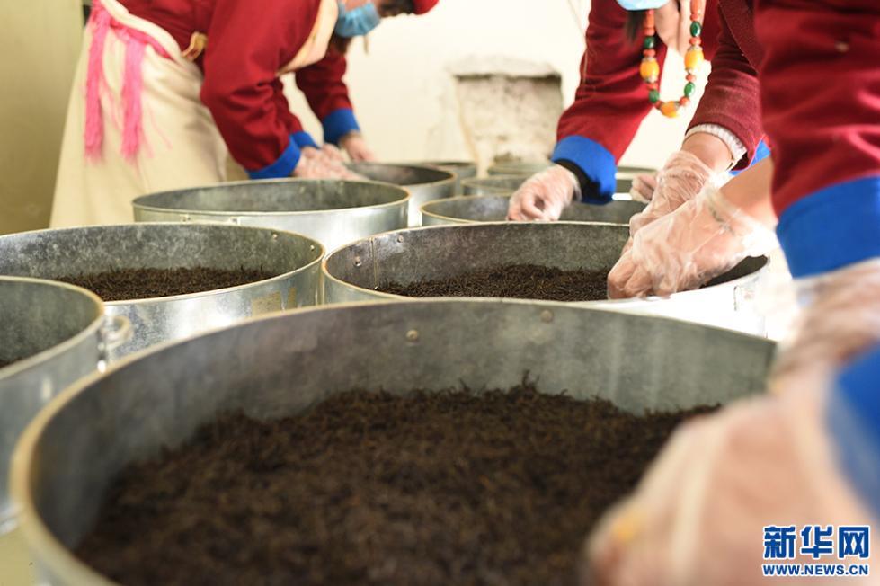 村民正在加工茶叶(5月12日 摄)。新华网记者 陈琳 摄