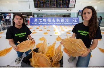 石首鱼鱼鳔被当神药售出天价 价格贵过毒品可卡因