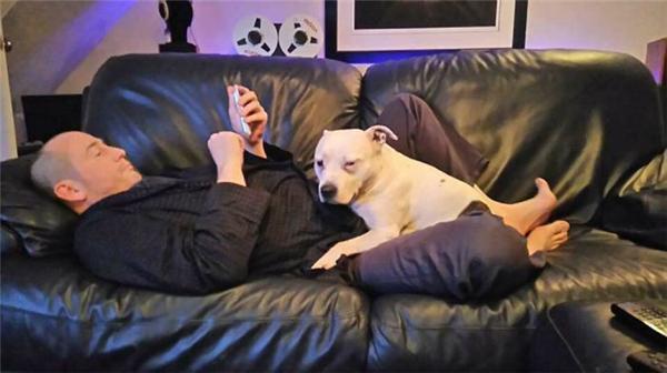 """主人为缺乏安全感的狗狗打造""""闺房"""" 电视机吊灯一应俱全"""