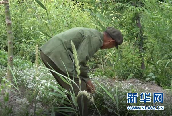 """【边疆党旗红】征战""""沙场""""60载 老兵王成帮的绿色边疆梦"""