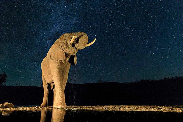 泰国解禁大象出口