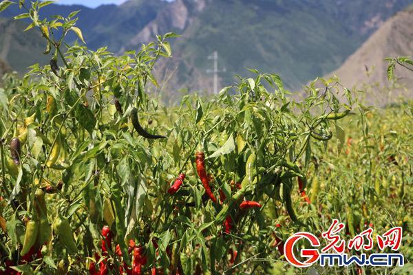 【新时代?边疆行】新时代西藏经济发展即将迎来新的阶段