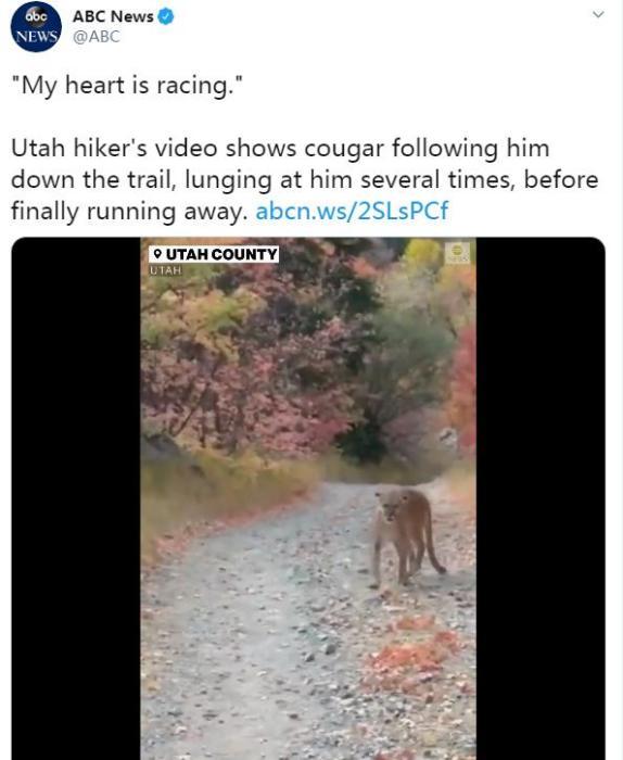 百事2注册:惊险!男子慢跑时遭美洲狮尾随 大声