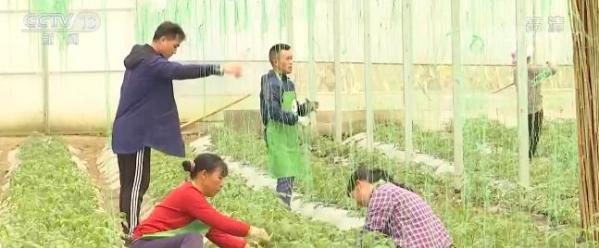 百事娱乐:全国蔬菜在田面积6800多万亩高