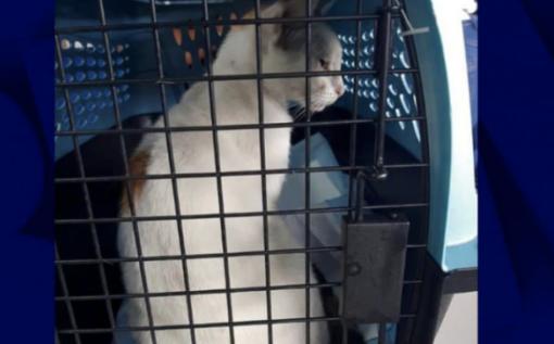 白猫角色排行_巴拿马一只白猫向监狱运毒:脖子上挂小袋子被当场抓获