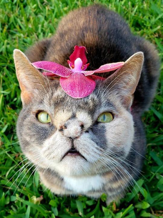 小猫排行_最忠心的猫咪排行榜,英短垫底,第一种明星都抢着养!