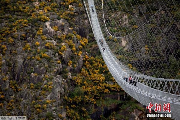 一眼望不到头!世界最长人行悬索桥开放