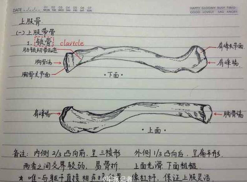 手绘骨骼图作笔记