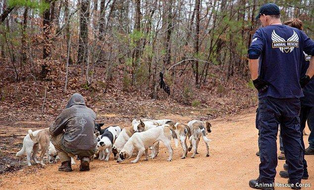 动物救助协会的工作人员在照顾流浪狗